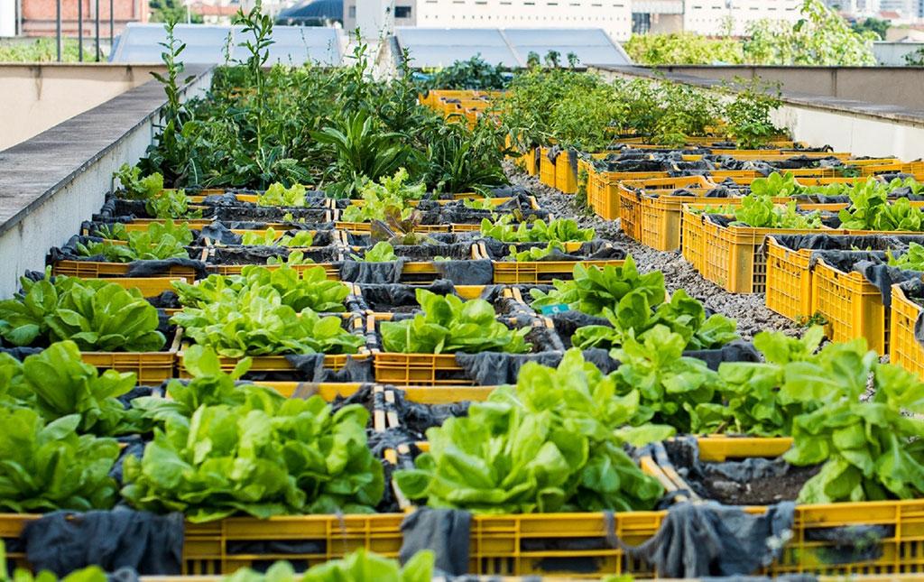 Gestão de resíduos: horta do Shopping Nova América - Revista Shopping Centers